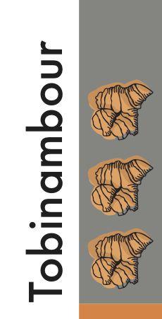 Topinambour